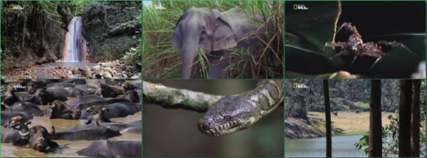 Джунгли Азии / Jungles of Asia (2016)